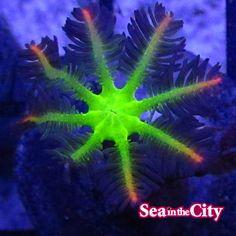 Reef Tanks, Live Coral, Corals, Sea, City, The Ocean, Cities, Ocean