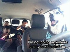 18 Funny Animal Pictures for Your Monday