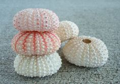 5 Pink Sea Urchins
