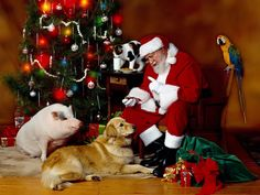 best Christmas with Santa Claus and Reindeer Flying images on