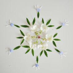 【落下花瓣第二次生命绽放】一位来自荷兰阿姆斯特丹的老师用花瓣与植物摆成创意作品