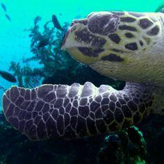 Turtle Waving    turtle turtle turtle!