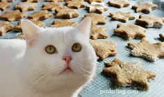 GALLETAS para GATOS caseras ★ Como hacer galletas para gatos caseras súper fácli, de atún y catnip. ★ Paso a paso, con VIDEO y FOTOS!!