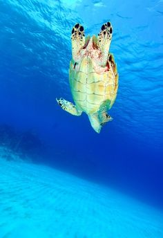 Top 50 Best Diving Destinations in the World