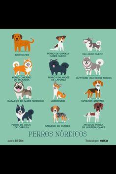 Perros nórdicos