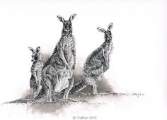 Eastern Grey Kangaroo Family Original Ink and by MatteoGrilliArt, $85.00