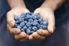 Just when you thought that the health benefits of blueberries couldn't be any more plentiful, new research has found that freezing the superfood actually increases the berry's nutritional content! Discover why & 8 reasons why you should have them daily!