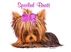 Spoiled Yorkie photo: Yorkie Graphic This photo was uploaded by addicted2yorkies... Love to spoil these babies