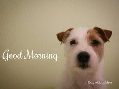 Mickey - Parson Russell Terrier - dogsundbuddies - Parson - Blog - Hundeblog - Dogblogger - Hundeblogger