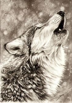 amazing drawings of animals - Google Search