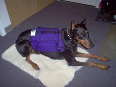 An Off Leash Dog Ruined My Life: A Service Dog's Story  by Jessica Dolce on January 4, 2012