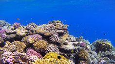 8月23日、紅海のサンゴ礁