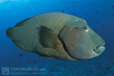 palau fish - Google 検索