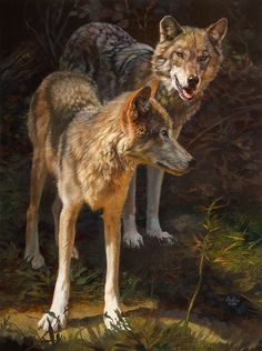 Stepping into Light by Julie Bell. Original fine art oil painting featuring wolves by award winning artist Julie Bell. Prints available. Wildlife Paintings, Wildlife Art, Animal Paintings, Animal Drawings, Coyotes, Wolf Hybrid, Julie Bell, Bell Art, Beautiful Wolves