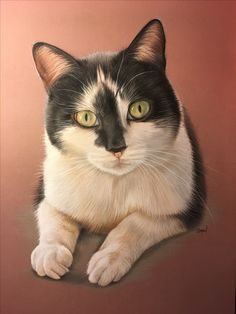 Image Chat, Cat Sketch, Photo Chat, Wildlife Paintings, All About Cats, Realistic Drawings, Illustrations, Illustration Cat, Cute Funny Animals