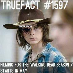 Best of The Walking Dead
