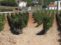 los vinos de la doc alentejo por pedro benito sez vinos y viedos
