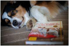 Buchempfehlung - Hilfe, mein Hund ist in der Pubertät! Entspannt durch wilde Zeiten.