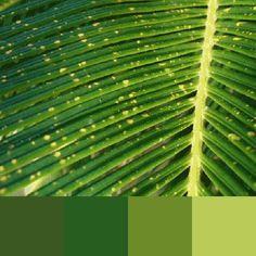 #colorscostabrava #verd #green #Costa Brava