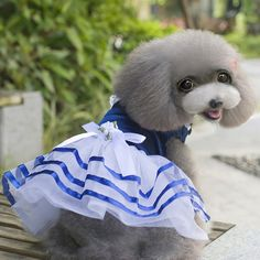 Summer Pet Dog Clothes Dog Dresses Lace Sailor Dog Tutu Dresses Stripes Skirt  Dress Pet Princess Clothing XS/S/M/L/XL // FREE Shipping //     Get it here ---> https://thepetscastle.com/summer-pet-dog-clothes-dog-dresses-lace-sailor-dog-tutu-dresses-stripes-skirt-dress-pet-princess-clothing-xssmlxl/    #catoftheday #kittens #ilovemycat #lovedogs #pup