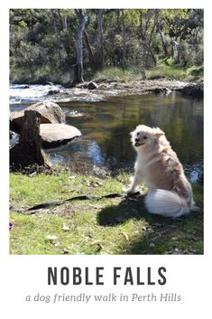 Noble Falls is a fantatic dog-friendly walk trail. This is also a top pick to take visiting friends and relatives to showcase our natural beauty. Western Australia, Dog Friends, Great Places, Natural Beauty, Picnic, Trail, Corgi, Places To Visit, Destinations