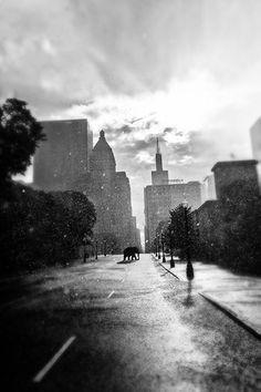 Elephant Photography Chicago