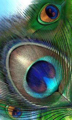 Peacock Feathers inspiration for nails. Love the colour scheme