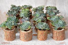 Living wedding favours epitomise the sustainability aspect of a rustic wedding as they can be enjoyed by your guests long after the wedding day is over.  The addition of the bark pots (bark is another very on trend wedding theme for 2013) is just gorgeous.  Each one is as individual as your guests are!  ---  20 succulent wedding favours in rustic tree branches UK. £50.00, via Etsy.
