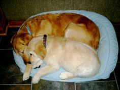 Isaiah Comfort Dog cuddling with his mom! #k9comfortdogs #dogs