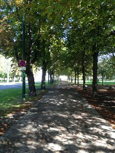 Chestnuts trees alley at Prater