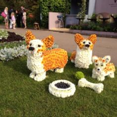 The Queen's Corgis (in flowers) at the Chelsea Flower Show. #loveit