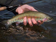 Nice shot from @keith.burtonwood1 #sunrayflyfish #nymphfishing #microthin #troutseason #troutfishing #flyfishing