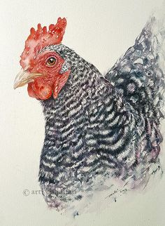 Rooster ChickenWatercolour Original Art Bird Painting Wall