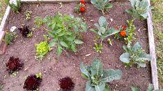 3 Feb Started garden