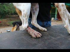 Rescatan a un perro con una herida muy fea en la pata
