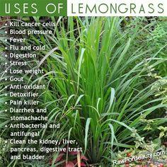 Uses for Lemongrass