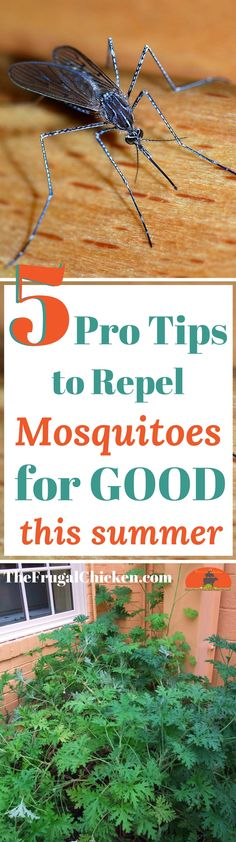 Summer is here....and so are the mosquitoes (yuck)! Here's 5 tips the best of the best use to battle the buggers and get rid of them for good.