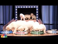 Puppies Predict the 2015 Final Four Championship - YouTube  Yeah my alma mater! Sparty on!