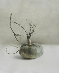iamjapanese:  Marzio Tamer(Italian, b.1964) Pumpkin  2012 Watercolour and dry brush on paper  Zucca  2008