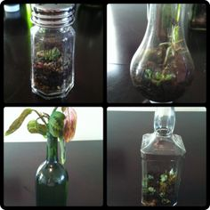 Turning (wine & liqueur) Bottles Into Mini Gardens :  gardening upcycle recycle project www.semperfimomma.com