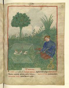 Nouvelle acquisition latine 1673, fol. 70, Chasse à la tourterelle. Tacuinum sanitatis, Milano or Pavie (Italy), 1390-1400.