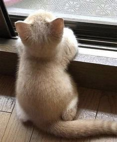 Animals And Pets, Funny Animals, Cute Animals, Animals Photos, Animal Tv, Whiskers On Kittens, Animal Print Fashion, Kawaii, Cat Gif