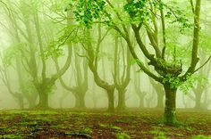 Oskar Zapirain's photographs capture eerie forests cast in thick fog, hazy light descending upon the foliage in the same green shade that blankets the floor in moss. Zapirain has been attracted to this landscape for years because of the homogenous light as well as the way it forces the viewer di