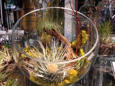 Tillandsia terrarium...so easy and fun making!!