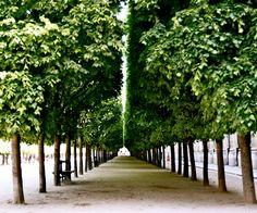 Paris Photography - Symmetry in Paris - 20 x 24 Large Photo -  Green Art Print - French Decor - Travel Art - Tree Print. $100.00, via Etsy.