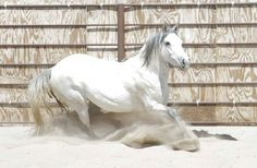 What a beautiful mustang! BLM Horse Number: 2725, Image Name:_MG_2225.jpg