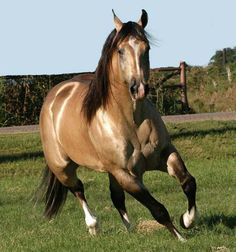 i do believe my next horse will be a quarter horse