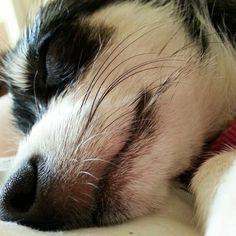 Sweet, sleepy baby girl.