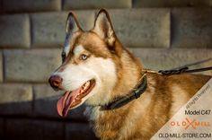 2 ply Leather Siberian Husky Collar