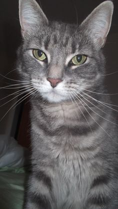 Michelle RebeccaLost & Found Cats of Connecticut tabby Yesterday · Lost Cat: Last seen 253 West River Street, Milford, CT. Indoor cat. Very friendly. Gray with creme colored underbelly. Please call 203 824 7012 or email michaelpierpaoli@yahoo.com with any information.